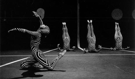 Zebre, 1971